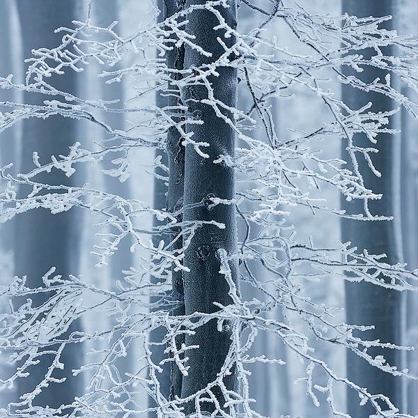 Fotografie Zimní stromy - Námraza na stromech na vrchu Studenec u České Kamenice. Foceno na Nový rok v Lužických horách.